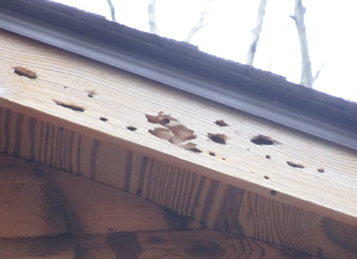 Woodpecker damage to log home.